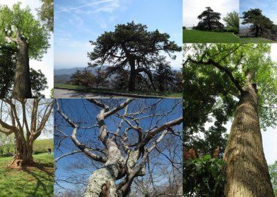Tout au long du voyage, nous avons rencontrŽ des arbres magnifiques
